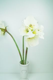 Artificial amaryllis -white